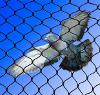 Ochrana proti vtákom - sieť proti holubom